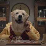 Publicidad canina
